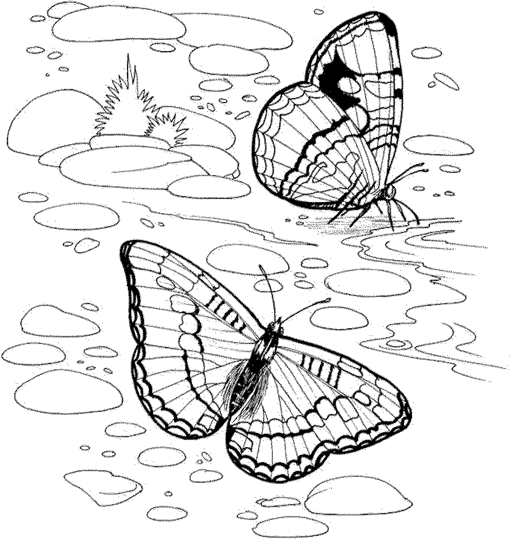 nature coloring pages for adults coloring pages for adults nature coloring home adults nature coloring pages for