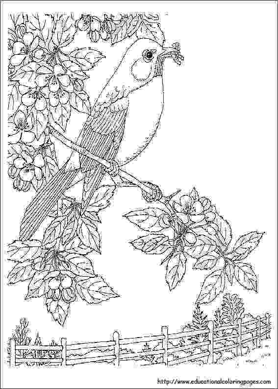 nature coloring pages for adults harmony of nature adult coloring book pg 26 bird adults coloring pages for nature