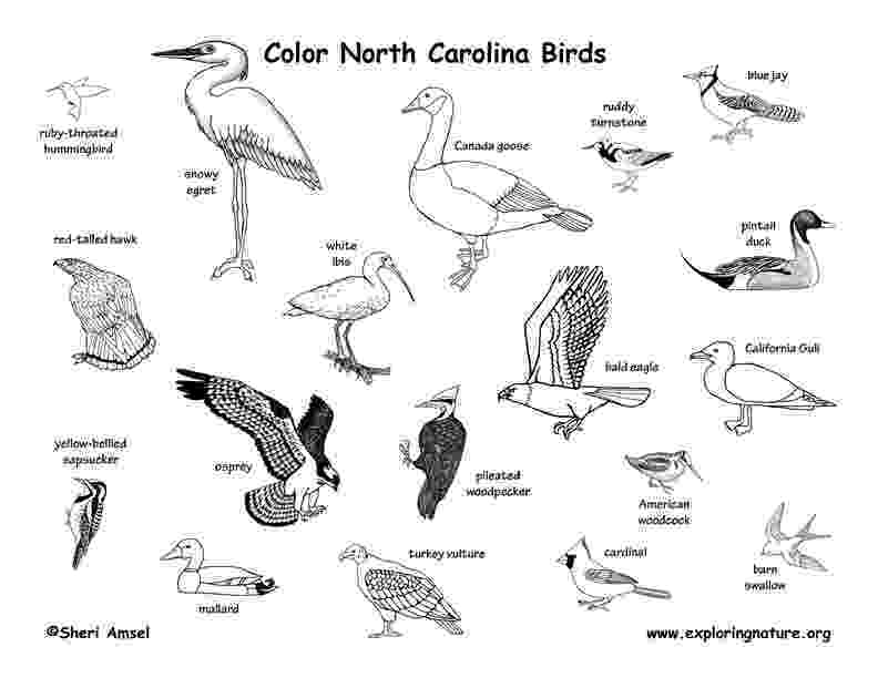north carolina state bird picture crista forest39s animals art things to color besides books bird state picture north carolina
