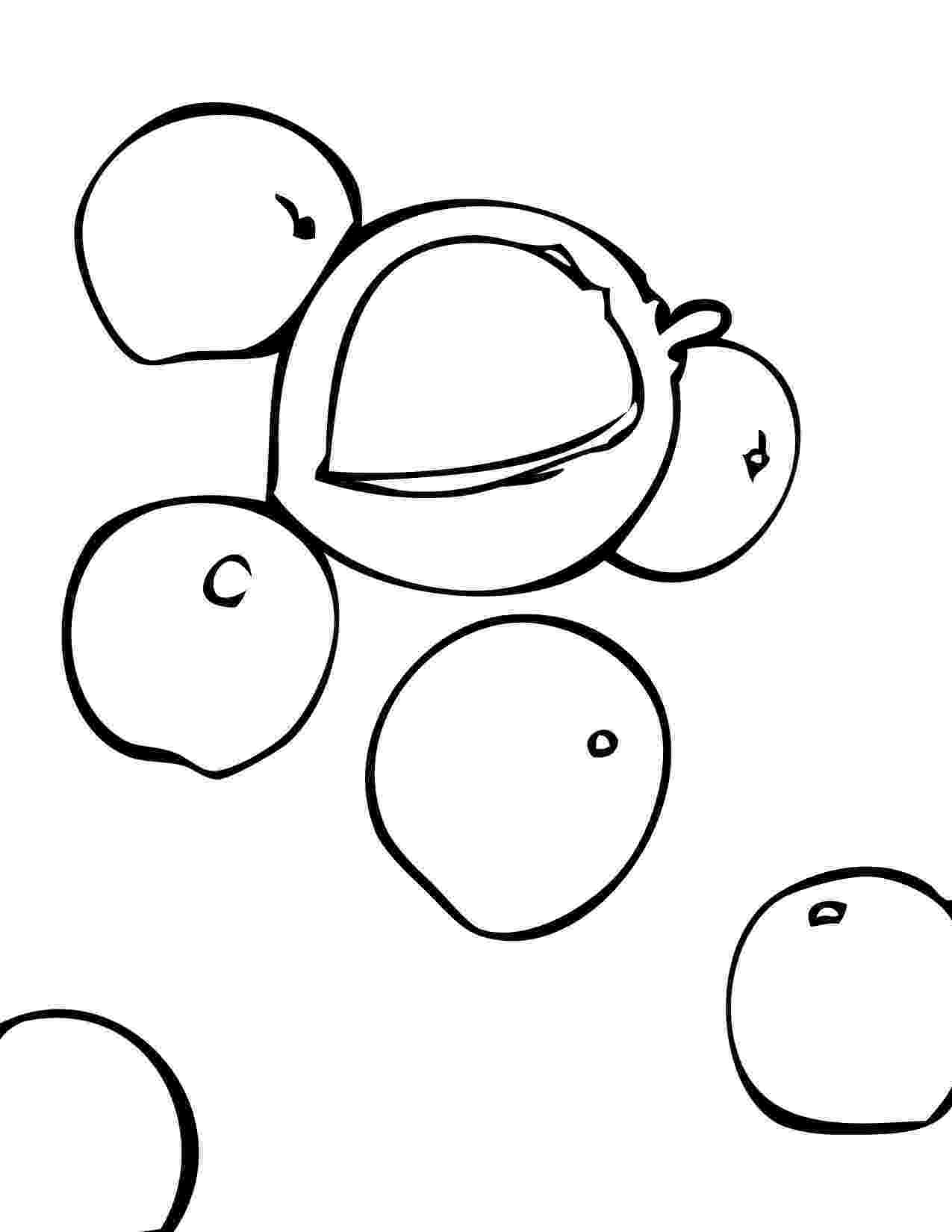nuts coloring pages nuts coloring page at getcoloringscom free printable nuts pages coloring