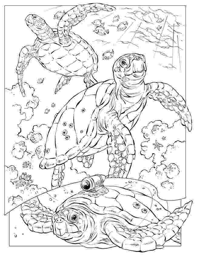 ocean animals coloring pages free printable ocean coloring pages for kids coloring coloring ocean animals pages