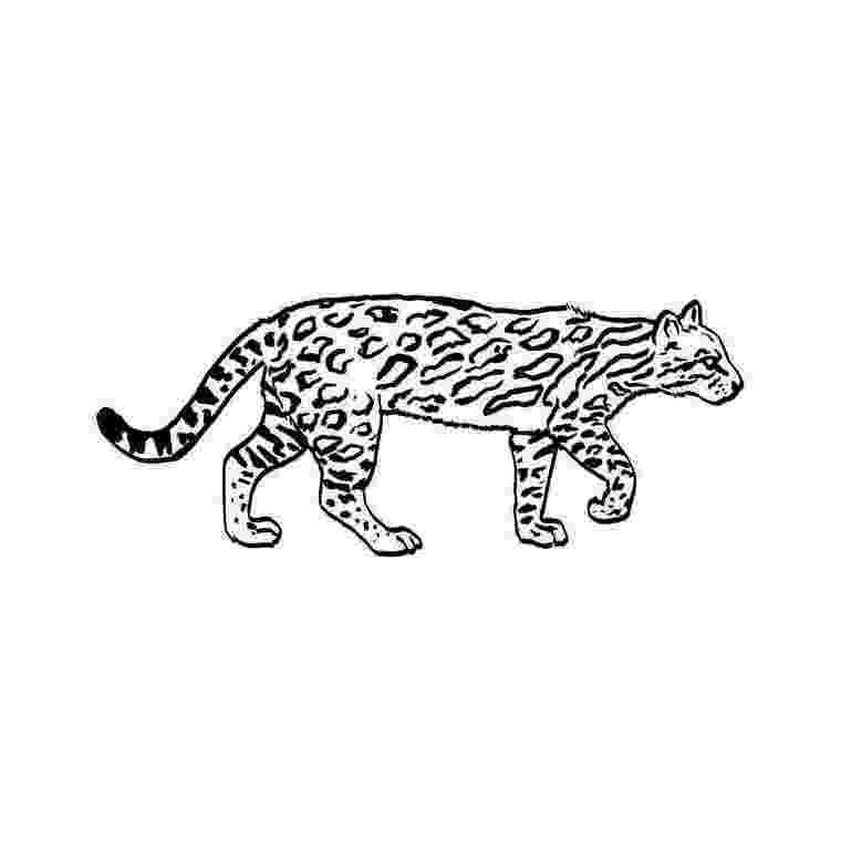ocelot color coloring page adult color images dog cat cat color ocelot