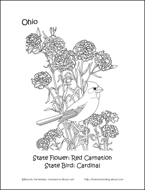 ohio state bird ohio state symbols coloring page free printable coloring ohio bird state