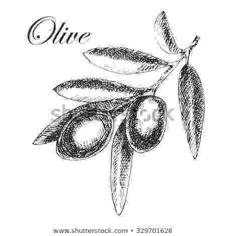olive branch sketch flower sketches sketch olive branch