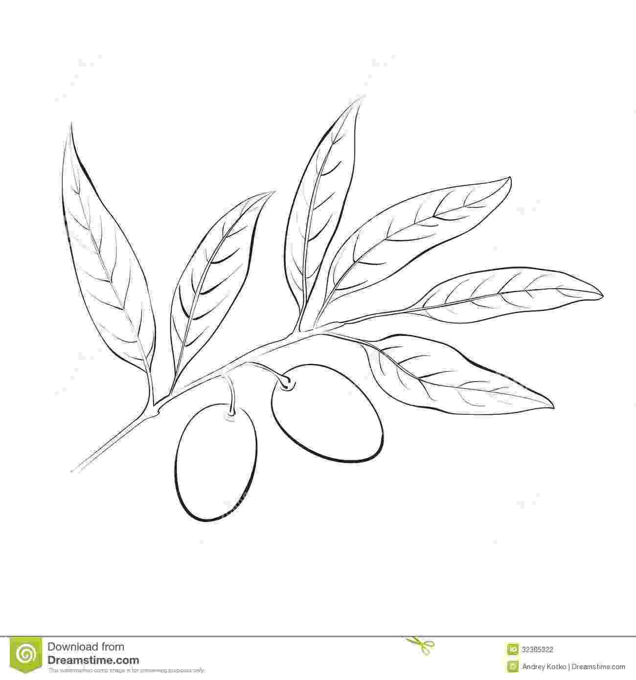 olive branch sketch hand drawn vector illustration olive branch stock vector sketch olive branch