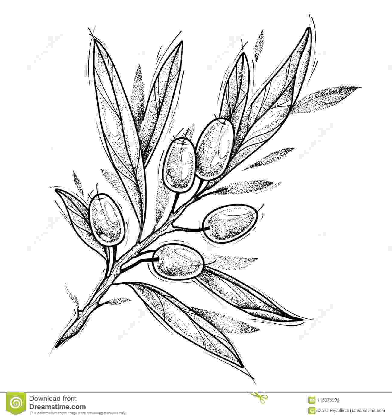 olive branch sketch olive branch tattoo design vector illustration isolated sketch olive branch
