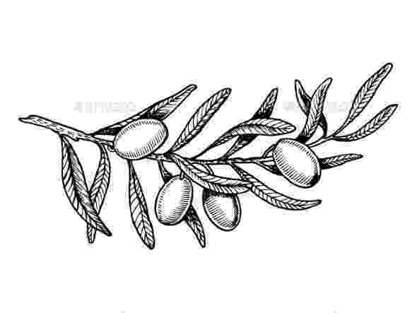 olive branch sketch olive branches in fruit clipart etc sketch olive branch