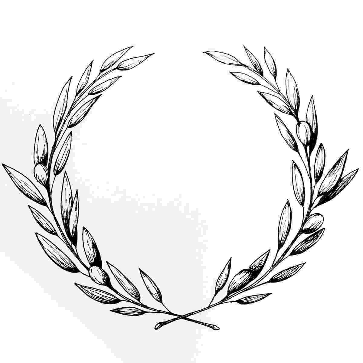 olive branch sketch olive wreath illustration amy rochelle press sketch olive branch