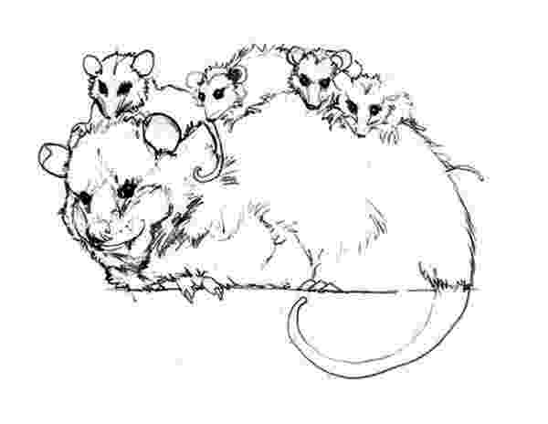 opossum coloring page a mamma opossum and her joeys crayon palace coloring page opossum