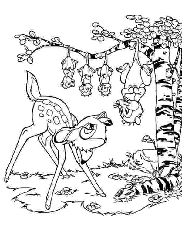 opossum coloring page opossum coloring pages to download and print for free page coloring opossum