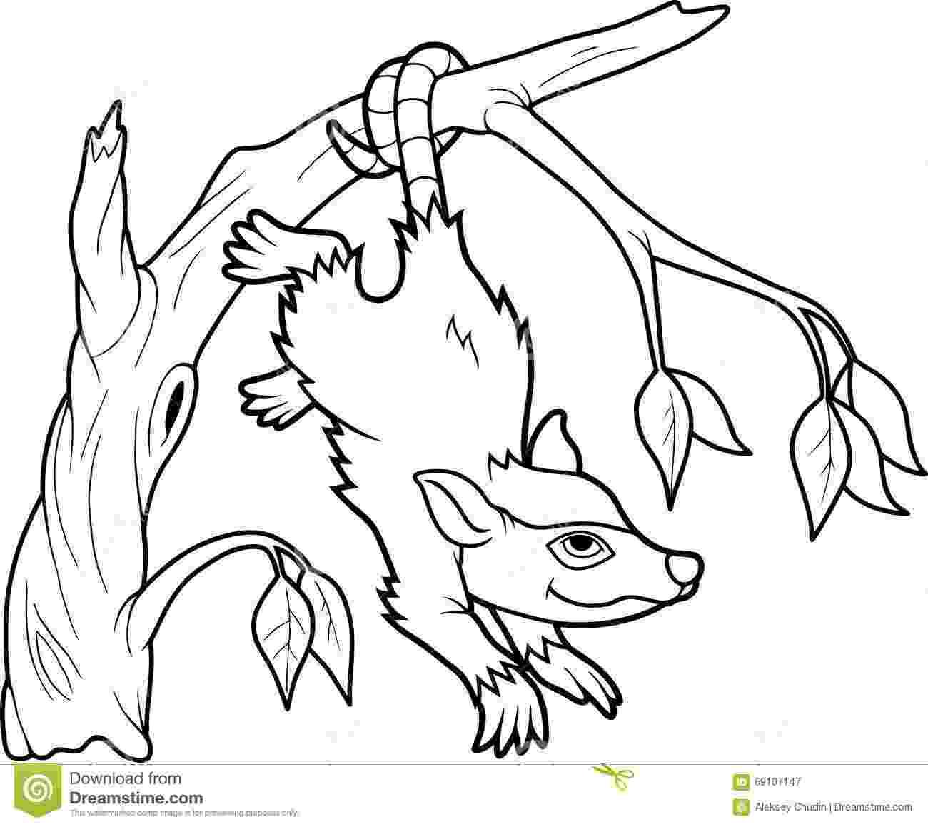 opossum coloring page virginia opossum coloring page free printable coloring pages coloring page opossum