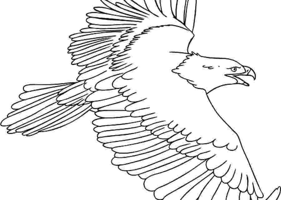 osprey coloring page coloring pages coloring pages osprey printable for kids page osprey coloring
