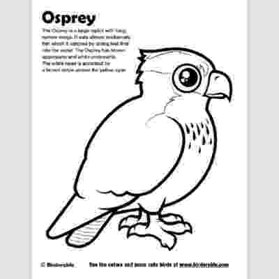 osprey coloring page osprey coloring download osprey coloring for free 2019 osprey coloring page