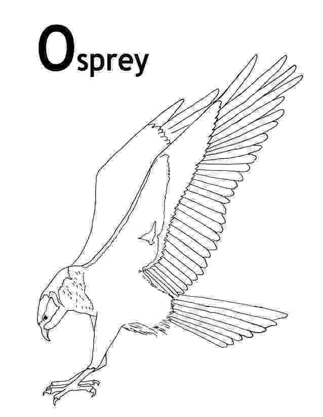 osprey coloring page osprey coloring page animals town free osprey color sheet coloring osprey page