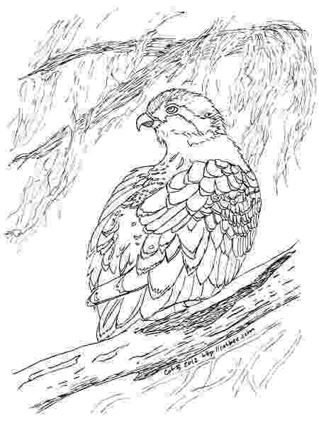 osprey coloring page osprey coloring pages sketch coloring page osprey page coloring