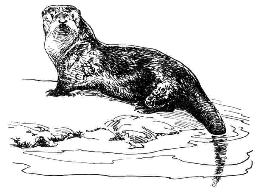 otter coloring pages untitled document otterquestcom otter coloring pages