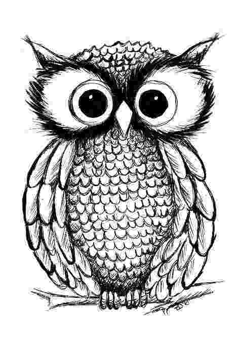 owl colour owl coloring pages adult coloring pages coloring owl owl colour