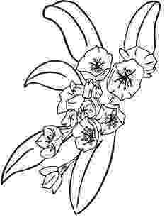 pa state flower 50 state flowers coloring pages for kids pa state flower