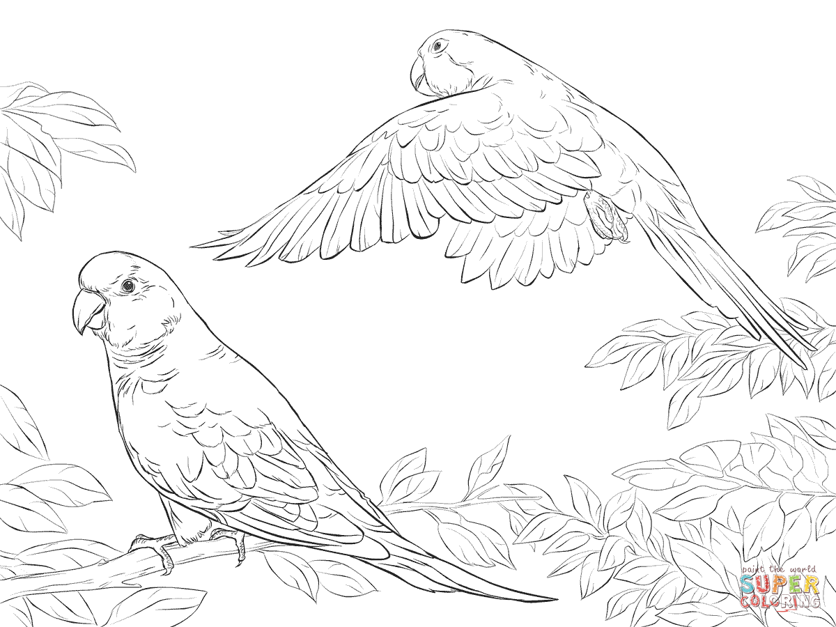 parrot coloring pages lovely parrot coloring page download print online parrot coloring pages