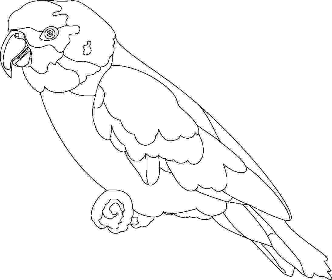 parrot pictures for kids to color bird10 coloring kids color parrot for to pictures kids