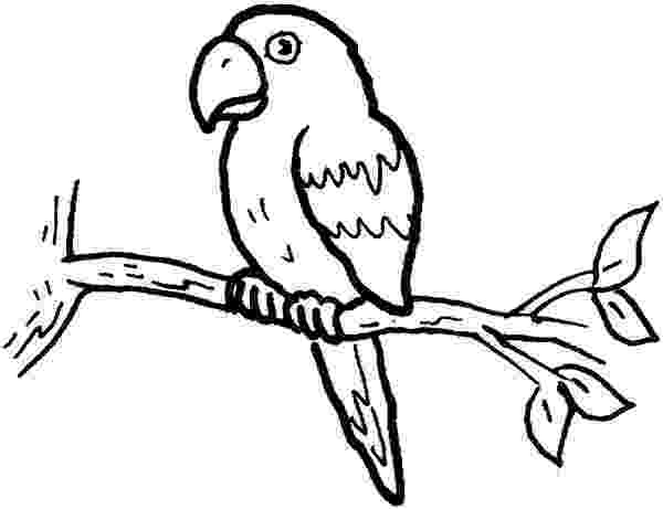 parrot pictures for kids to color free printable parrot coloring pages for kids coloring parrot to pictures color kids for