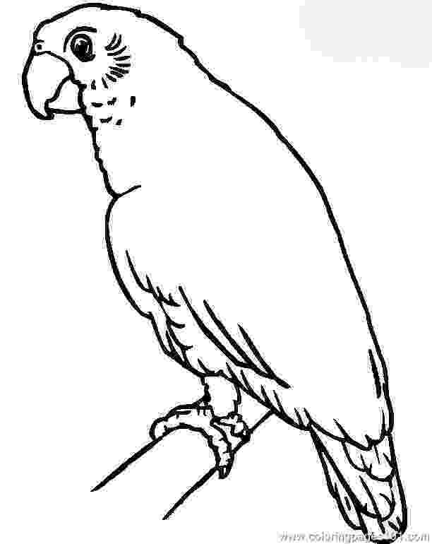 parrot pictures for kids to color free printable parrot coloring pages for kids parrot kids for color pictures to 1 1