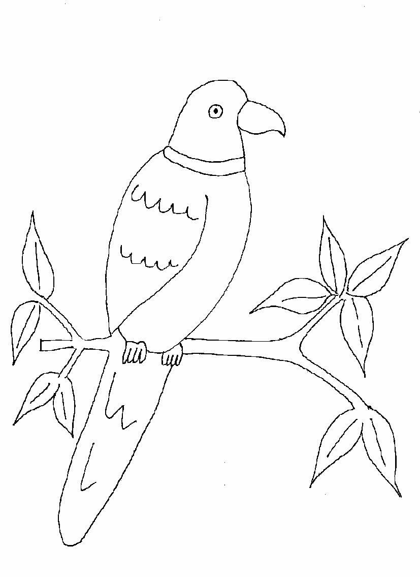 parrot pictures for kids to color parrot looking for food coloring page bird coloring parrot to for pictures kids color