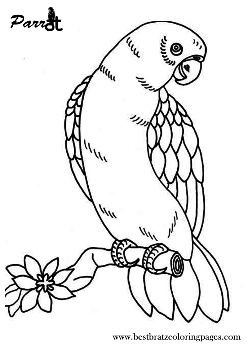 parrot pictures for kids to color parrot printable coloring page for kids to parrot pictures kids color for