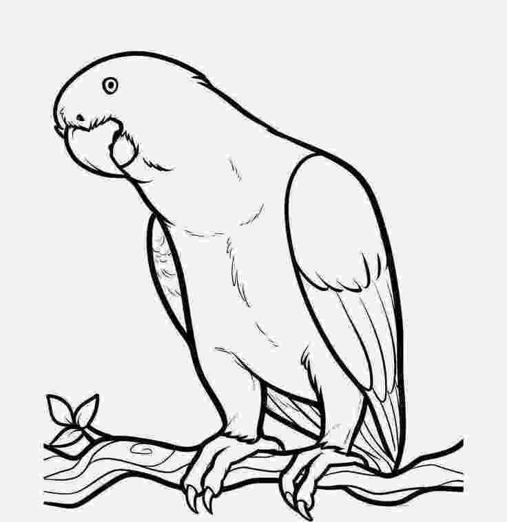parrot pictures for kids to color smiley parrot coloring page for kids to parrot color for kids pictures