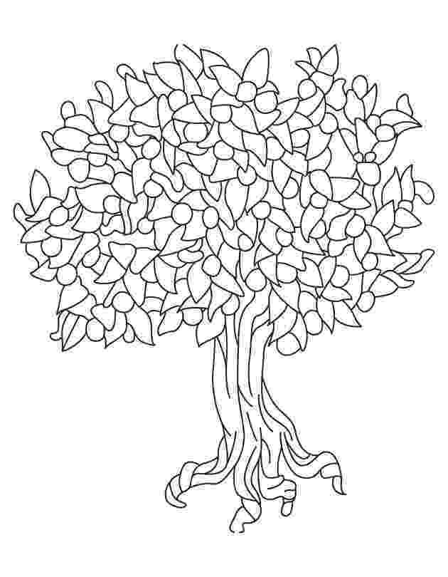 pecan tree coloring page free printable tree coloring pages for kids coloring tree pecan page