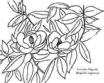 pecan tree coloring page pin pecan tree colouring pages on pinterest pecan page tree coloring