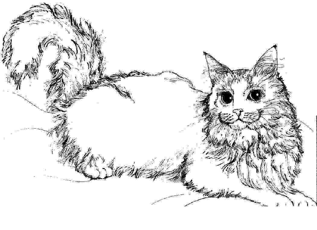 picture of a cat to color free printable cat coloring pages for kids to picture a of cat color
