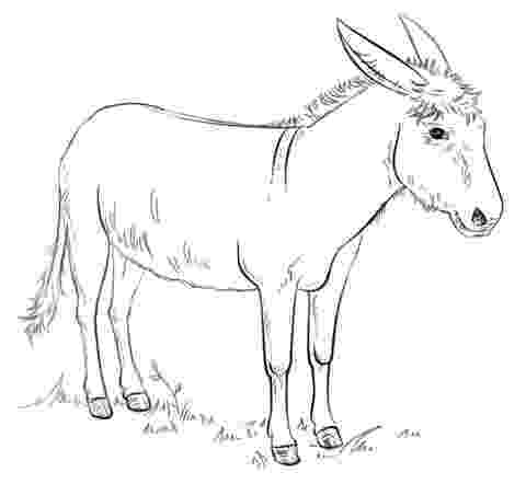picture of a donkey to color donkey coloring page animals town animals color sheet color donkey of picture a to