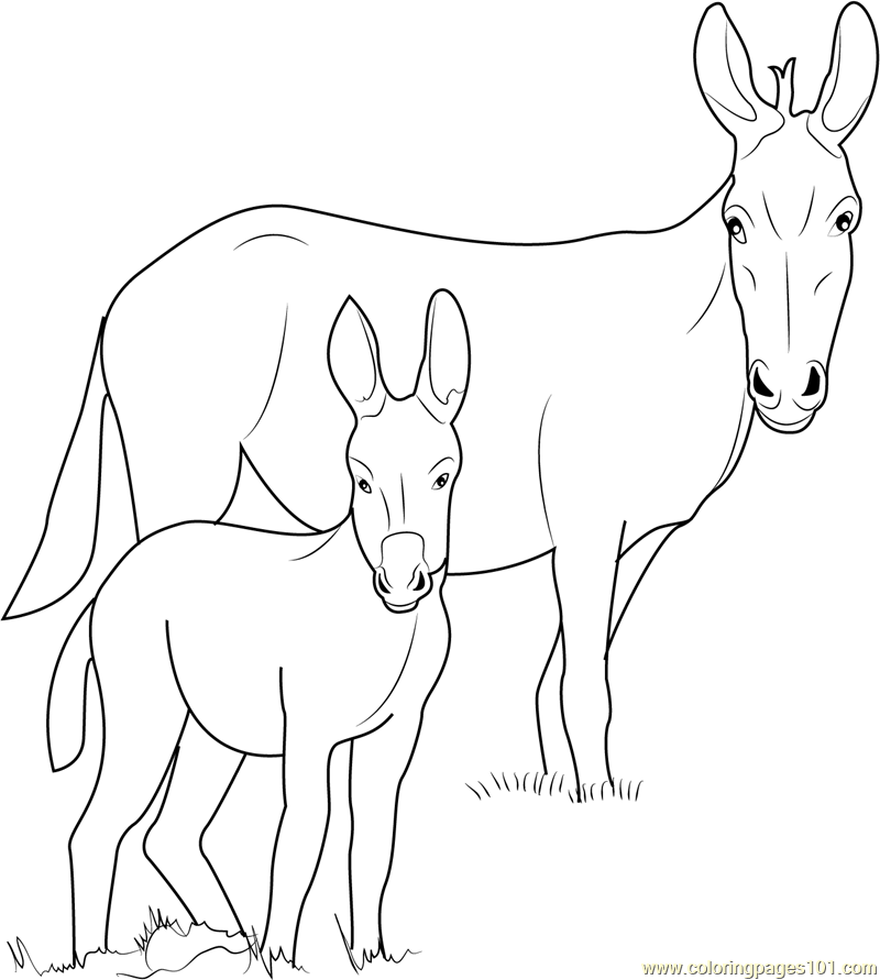 picture of a donkey to color donkey coloring pages of picture a donkey to color