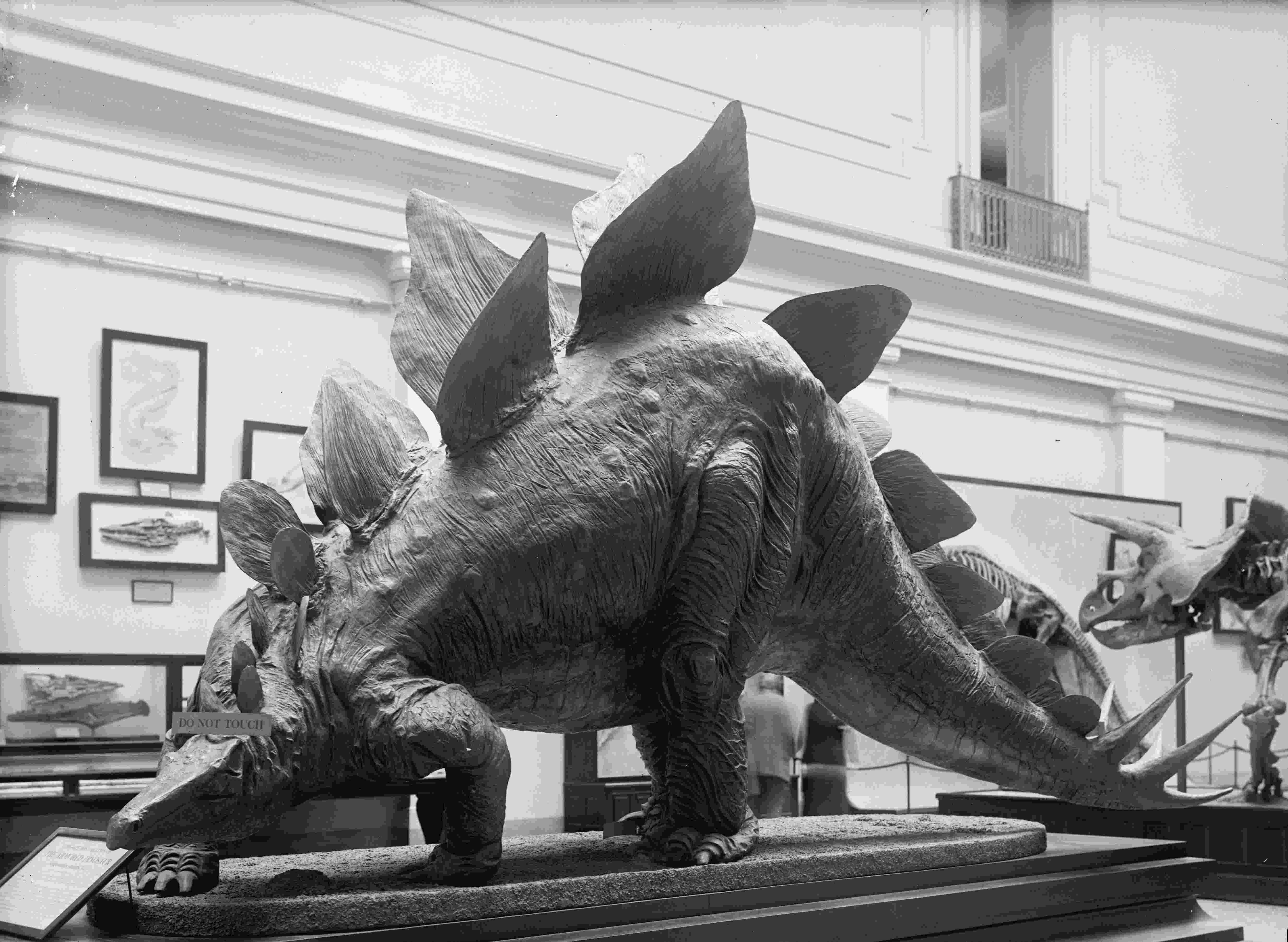 picture of a stegosaurus allan mccollums fossil art extinct monsters of picture a stegosaurus