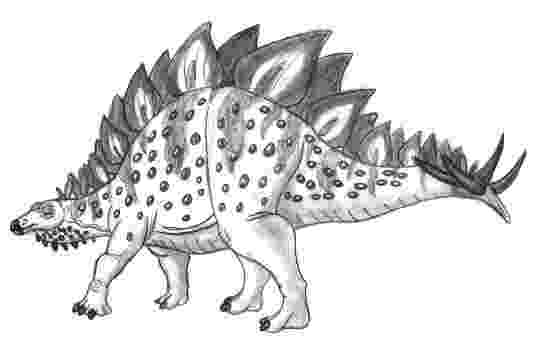 picture of a stegosaurus art evolved life39s time capsule january 2013 stegosaurus of picture a