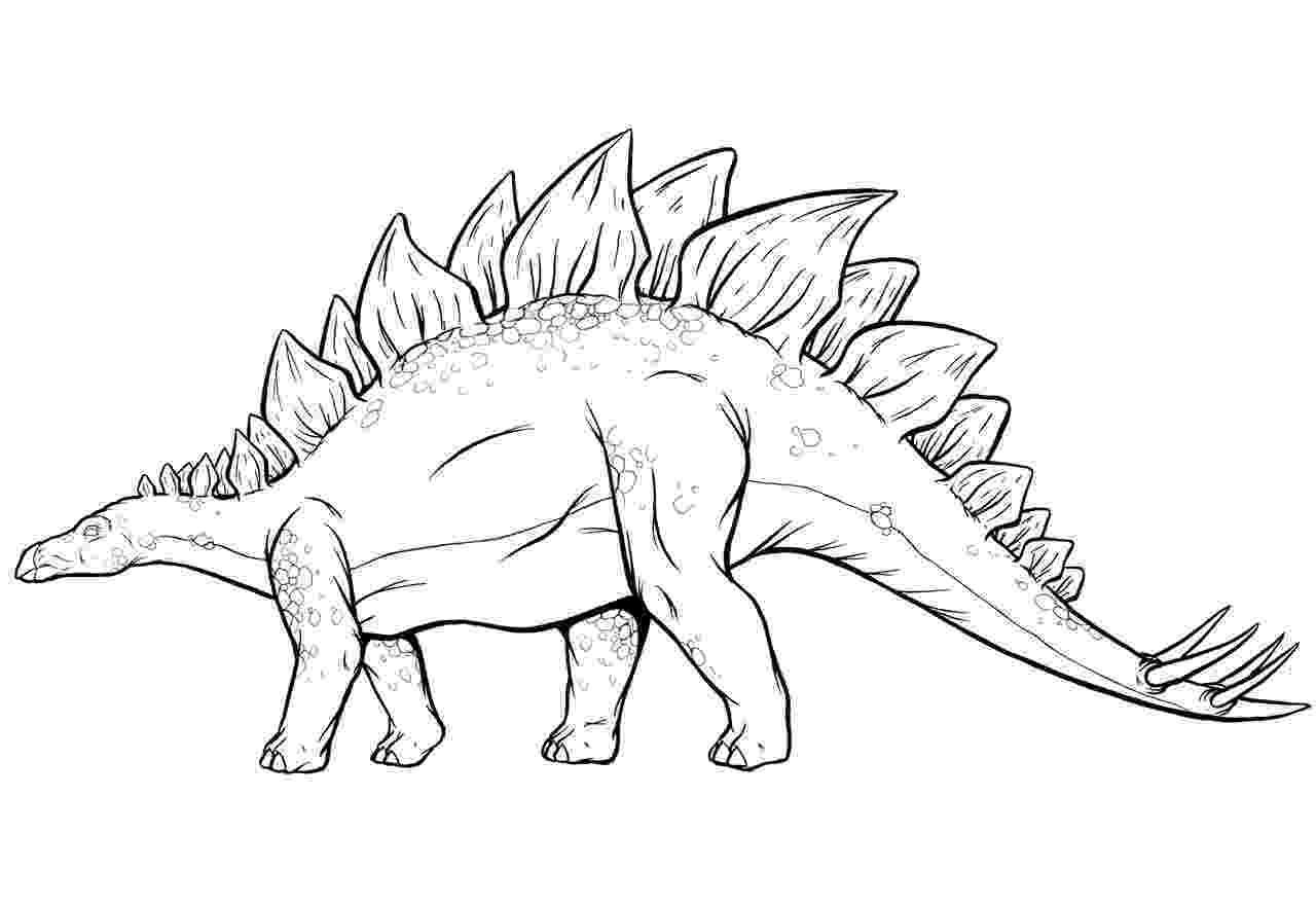 picture of a stegosaurus dangerous stegosaurus coloring pages hellokidscom stegosaurus of a picture