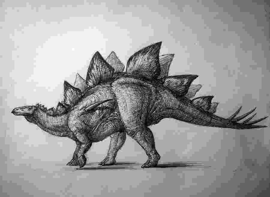 picture of a stegosaurus dinogoss the evolving view of stegosaurus of stegosaurus a picture