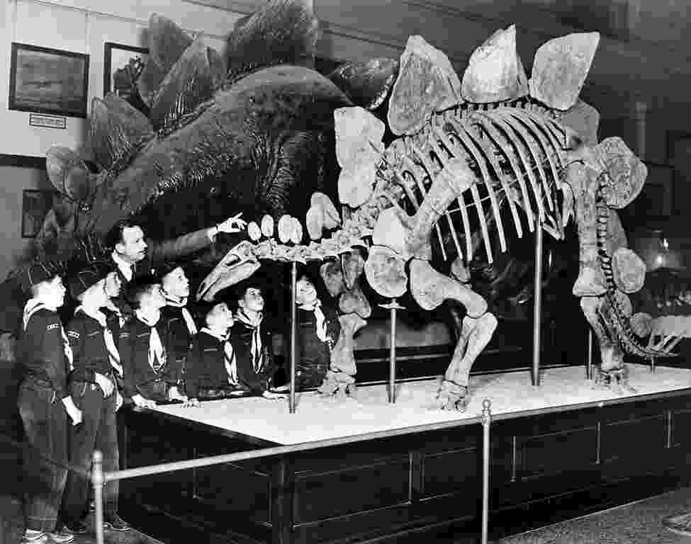 picture of a stegosaurus stegosaurs on ornithischia deviantart a of picture stegosaurus