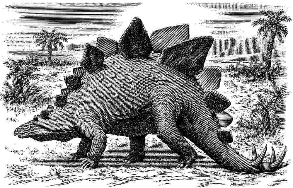picture of a stegosaurus stegosaurus printout zoomdinosaurscom stegosaurus picture a of