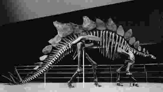 picture of a stegosaurus test 3 geology 106 with yancey at texas am university a of picture stegosaurus
