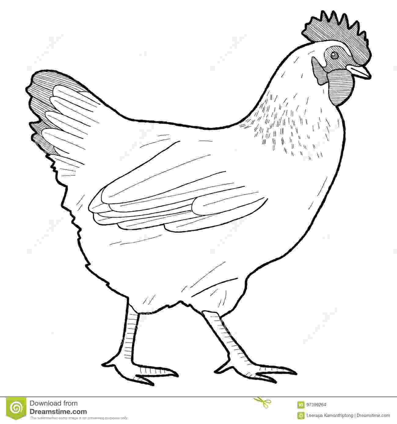 picture of chicken hen clipart 2 chicken cute borders vectors animated picture of chicken