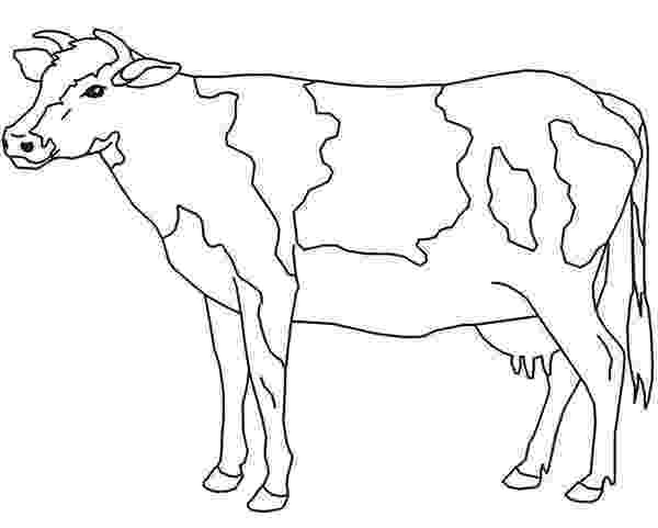 picture of cow for colouring free cow coloring pages printable colouring of picture for cow