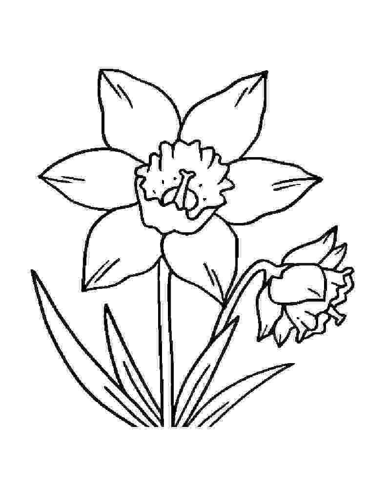 pictures of daffodils to color d is for daffodil coloring page netart daffodils to color of pictures