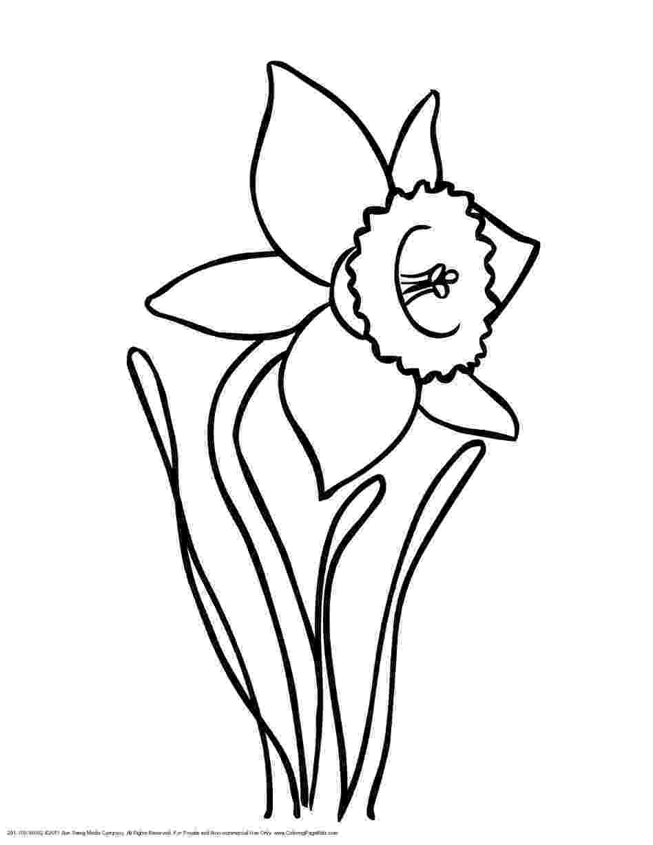 pictures of daffodils to color daffodil coloring page school pinterest of pictures to daffodils color