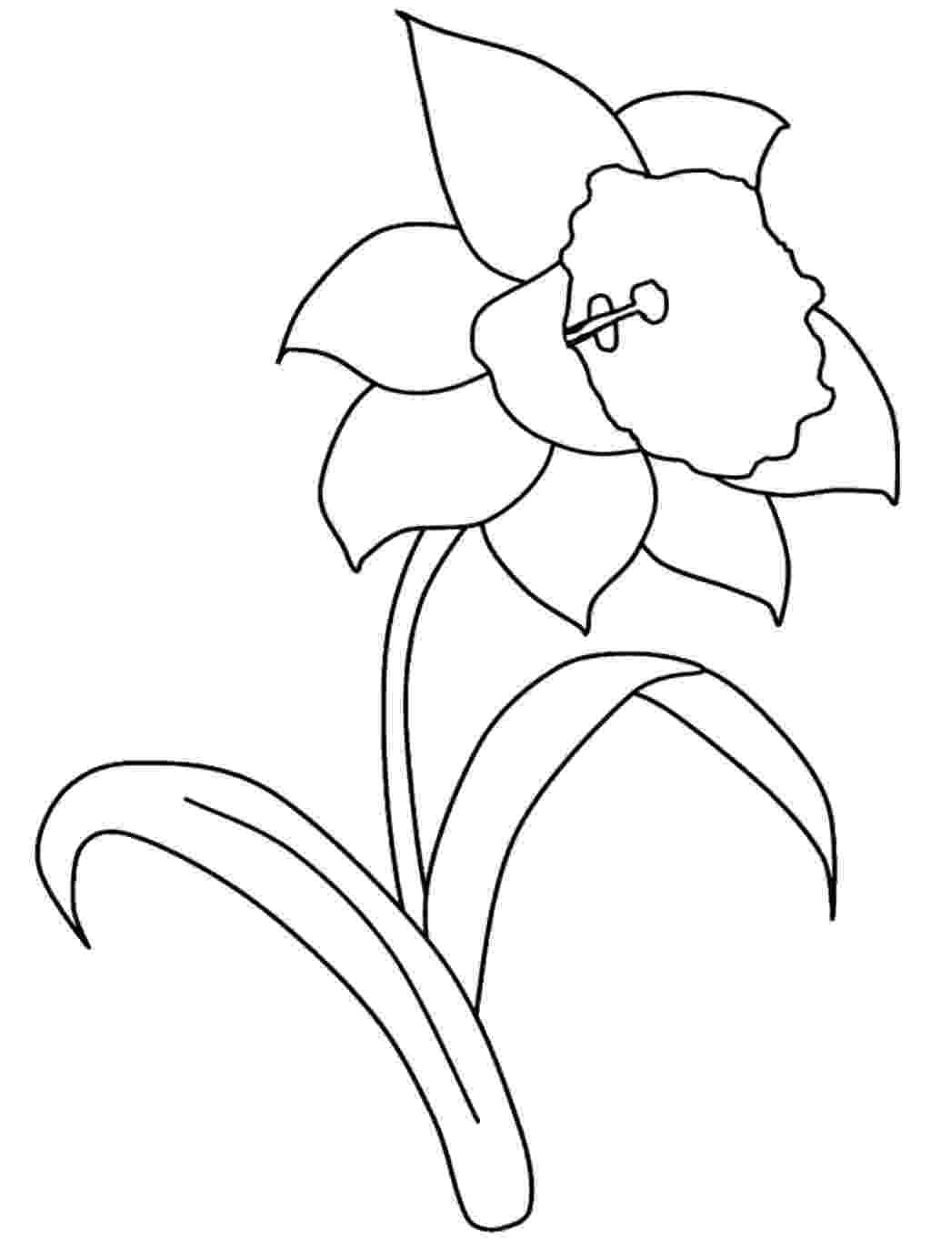 pictures of daffodils to color daffodil coloring pages download and print daffodil color to pictures daffodils of