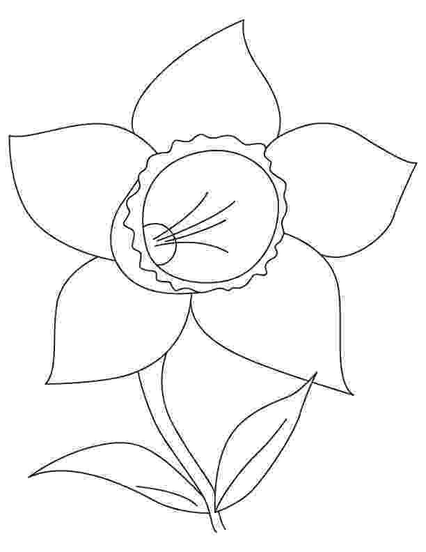 pictures of daffodils to color daffodil coloring pages free coloring pages coloring color of to daffodils pictures