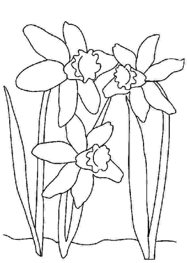 pictures of daffodils to color daffodil field coloring page coloring pages pictures of color to daffodils