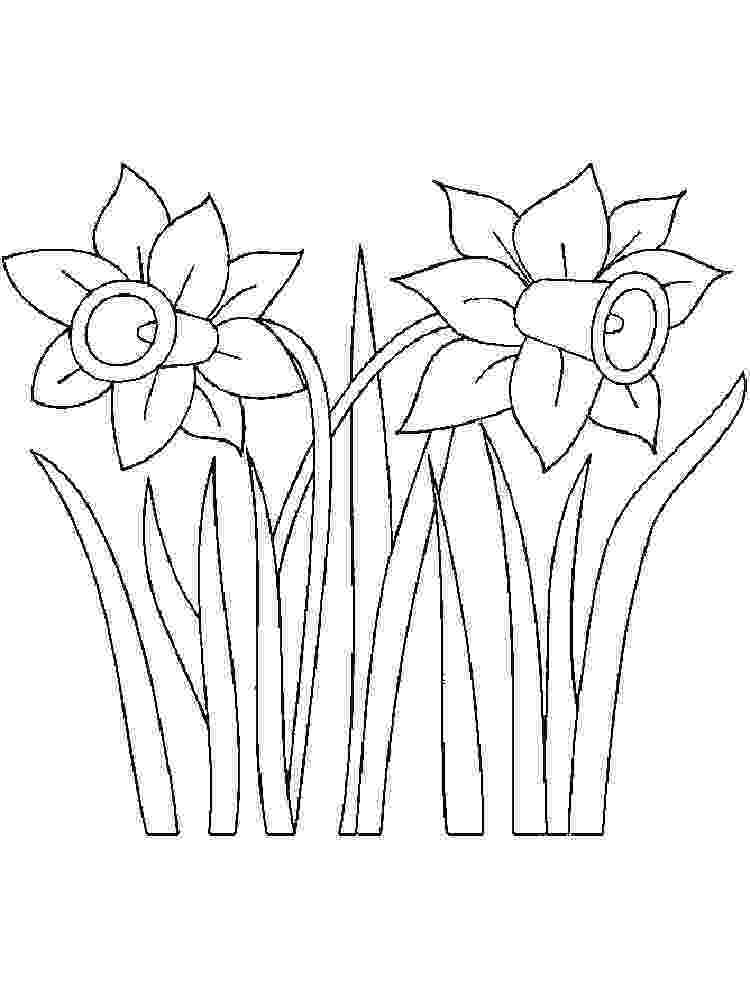 pictures of daffodils to color daffodil flowers coloring online super coloring to daffodils color pictures of
