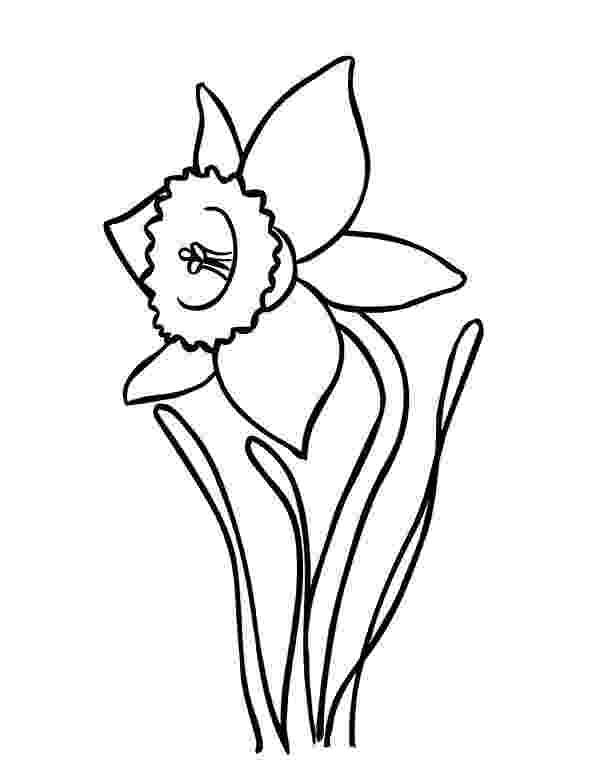 pictures of daffodils to color daffodils coloring pages to print free coloring sheets pictures to color daffodils of